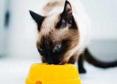alimentos para não dar ao gato